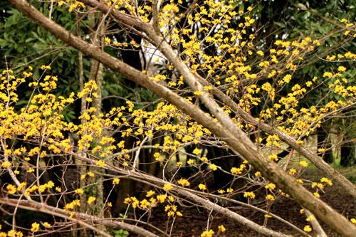 植物園 木の花_e0048413_18371991.jpg