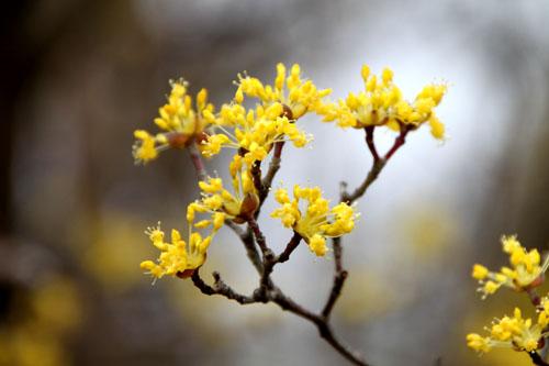 植物園 木の花_e0048413_18373893.jpg