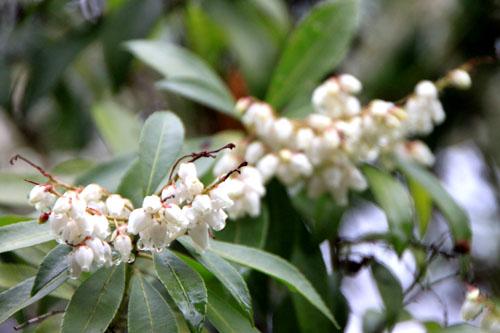 植物園 木の花_e0048413_18381770.jpg
