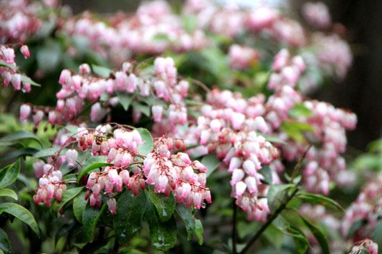 植物園 木の花_e0048413_1838472.jpg