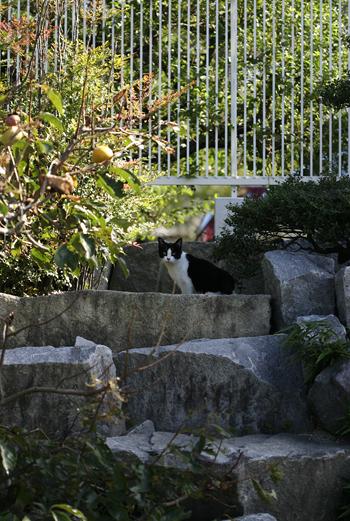 [猫的]寄らば・・・_e0090124_826610.jpg