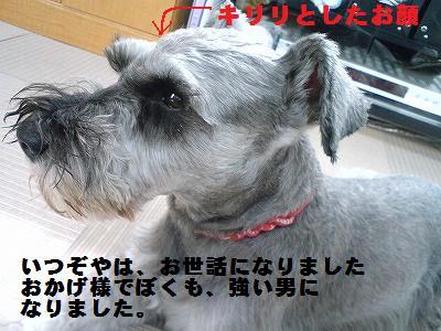 a0169935_0305337.jpg