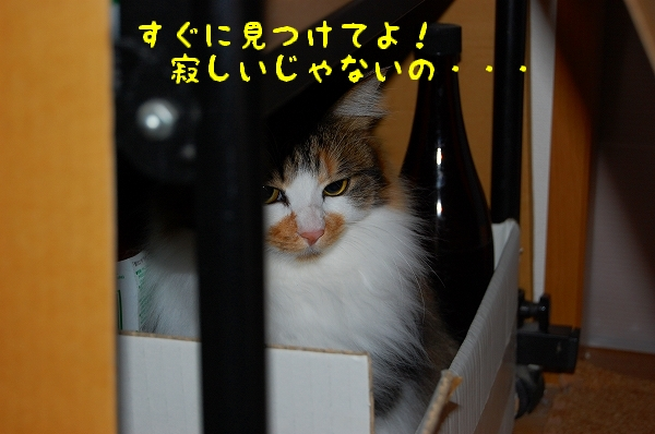 c0181639_123419.jpg