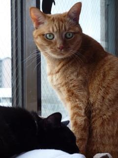 どっち猫 しぇるろった編。_a0143140_1429845.jpg