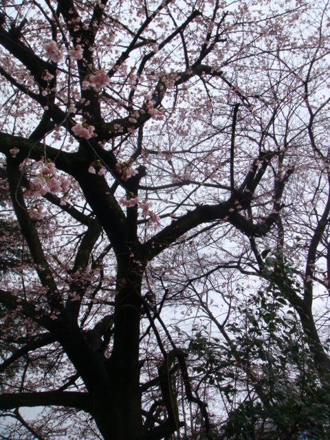 春のようですよ♪_b0159549_1143325.jpg