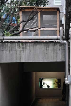 ネコの新居(中古住宅)_b0023856_20213295.jpg