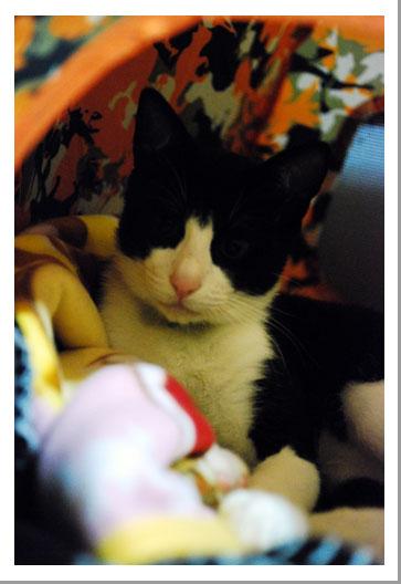 我が家の子猫ちゃん_c0179982_0354767.jpg