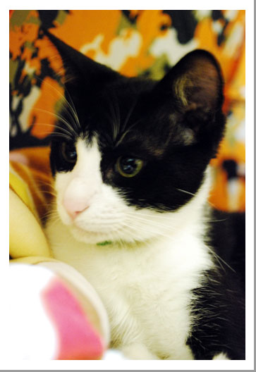 我が家の子猫ちゃん_c0179982_03847.jpg