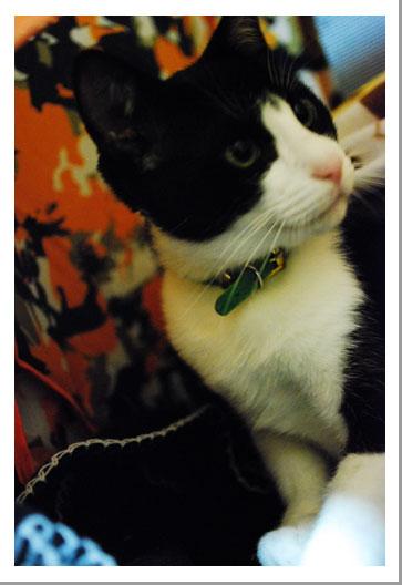 我が家の子猫ちゃん_c0179982_0385524.jpg