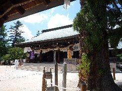 吉備津彦神社の平安杉(備前国)_a0004391_23484533.jpg
