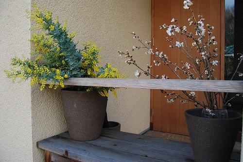玄関廻りの春…_c0124100_2283354.jpg