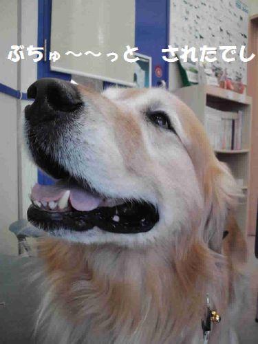 b0127531_14355937.jpg