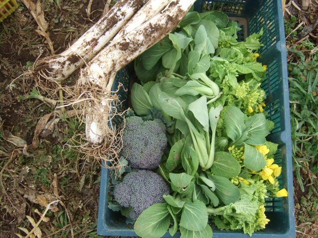 野菜の種まき.....気候不順で!_b0137932_19152116.jpg