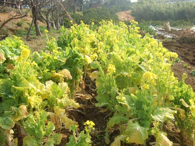 野菜の種まき.....気候不順で!_b0137932_1943293.jpg