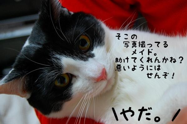 c0181639_1451533.jpg