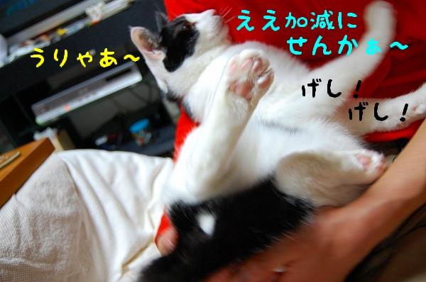c0181639_1453725.jpg
