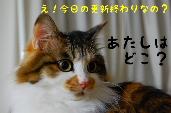 c0181639_146033.jpg