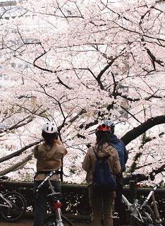 4月4日(日) JOGLIS発 港区の桜めぐり_c0047856_984744.jpg