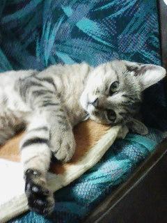大きくなりました…保健所出身の猫ちゃんしあわせ便り♪_c0167175_018947.jpg
