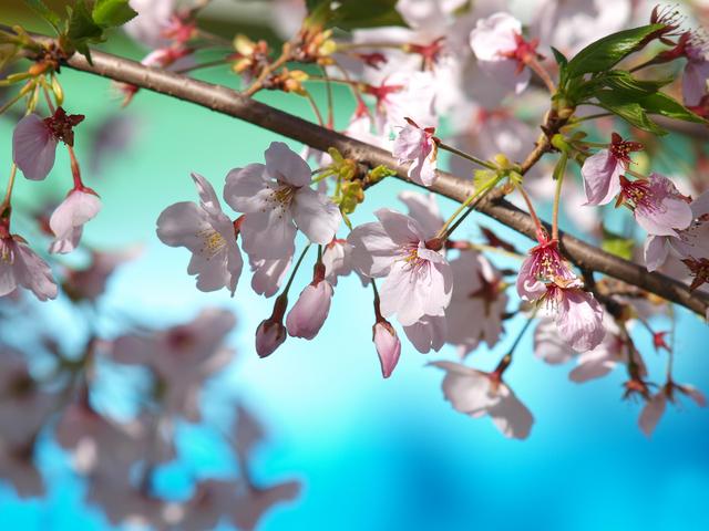 梅は咲いたか桜はまだか☆_b0097224_23475339.jpg