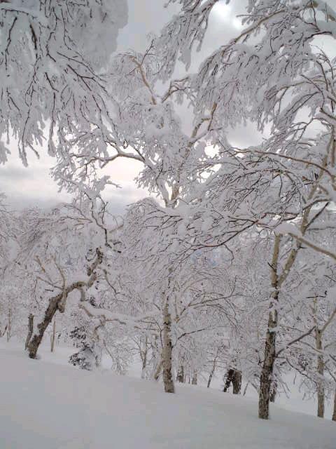 旭岳☆樹氷コース_c0151965_19215355.jpg