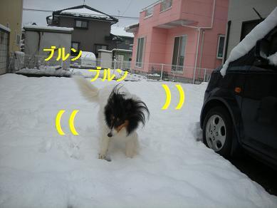 f0081100_1618328.jpg
