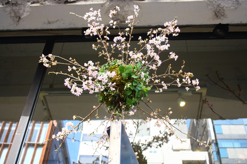 祝 「SAKURASAKU」 開催中!_c0188809_2241196.jpg