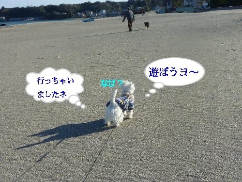a0161111_2015472.jpg