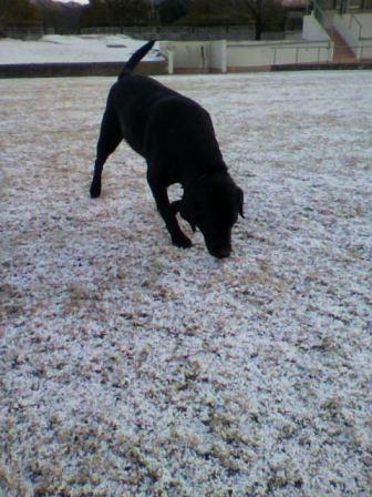 雪とバロン_c0209415_9352936.jpg