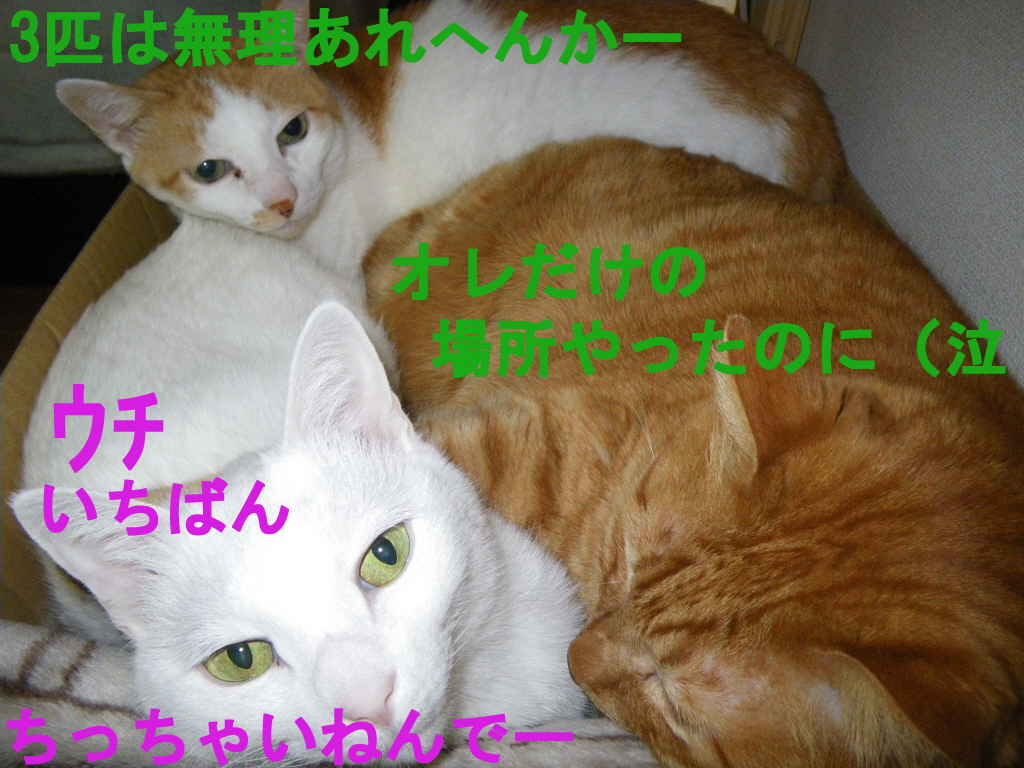 f0192630_19493266.jpg