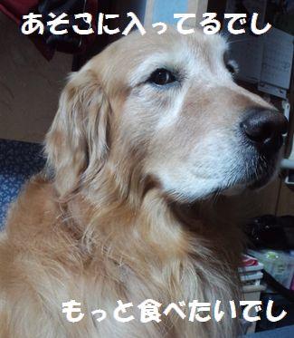 b0127531_8505449.jpg