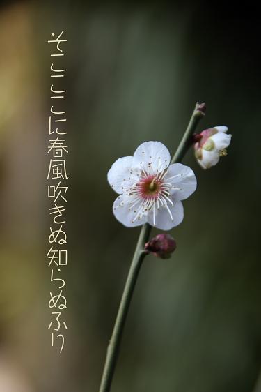 f0100234_18595774.jpg
