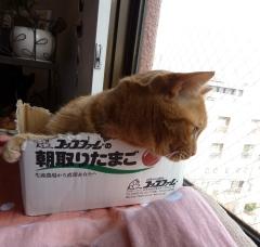 ガジガジアーティスト猫 しぇるのぇるろった編。_a0143140_16241352.jpg
