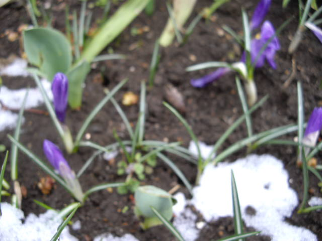 春の雪_d0116059_13224110.jpg