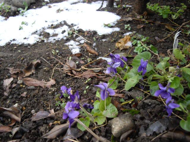 春の雪_d0116059_1324975.jpg