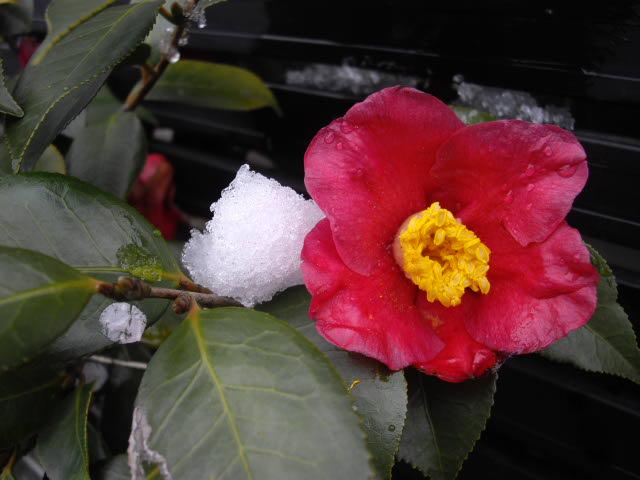 春の雪_d0116059_13255749.jpg