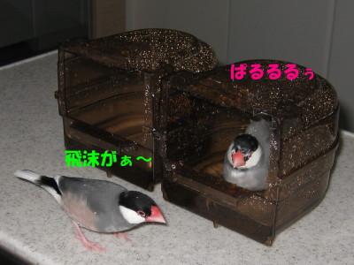 b0158061_22171639.jpg
