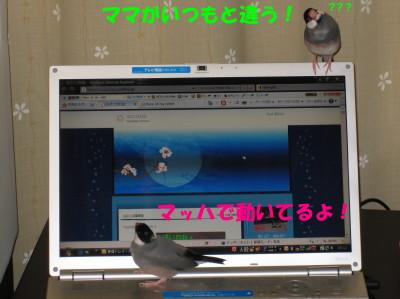 b0158061_2219019.jpg