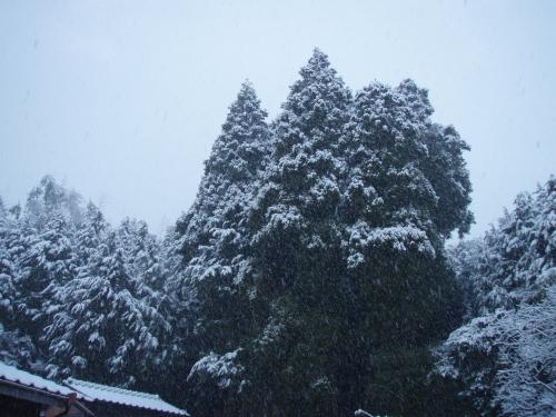 忘れ雪?_a0077071_17481141.jpg
