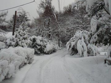 3月重たい雪です_f0141975_1628117.jpg