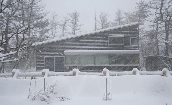 早春の吹雪_e0054299_9274866.jpg