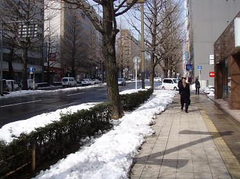 春まだ遠し・・・(その四)・・松の木折れだー!_b0074601_22204359.jpg