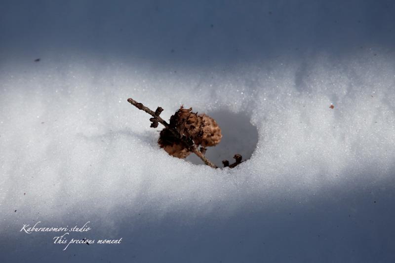 大雪の後散歩で出会った美しい風景_c0137403_17592161.jpg