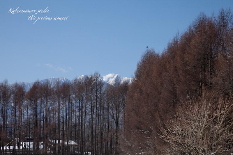 大雪の後散歩で出会った美しい風景_c0137403_1805986.jpg