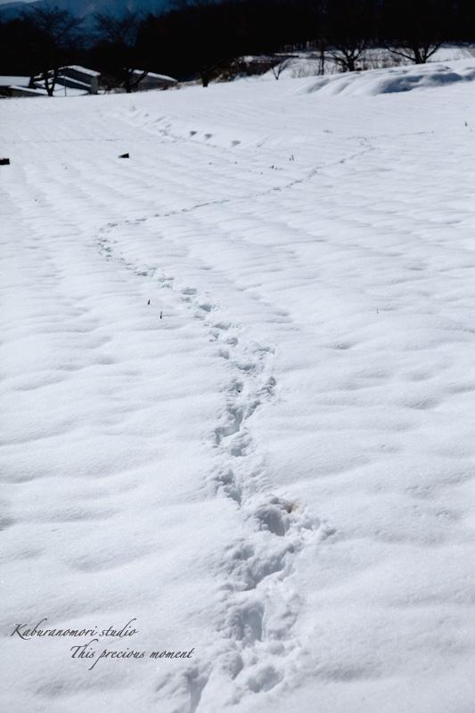 大雪の後散歩で出会った美しい風景_c0137403_1813264.jpg