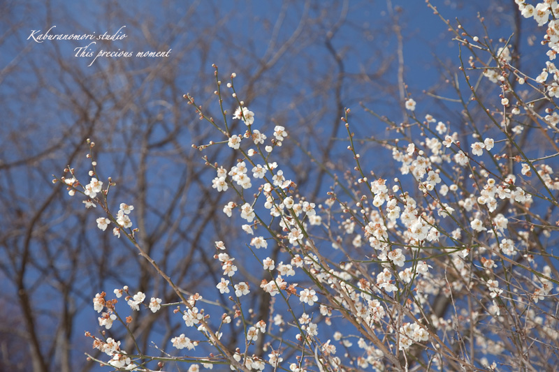 大雪の後散歩で出会った美しい風景_c0137403_183693.jpg
