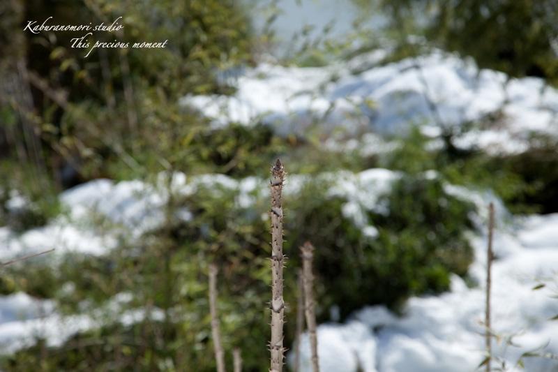大雪の後散歩で出会った美しい風景_c0137403_1861075.jpg