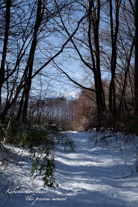 大雪の後散歩で出会った美しい風景_c0137403_1865737.jpg