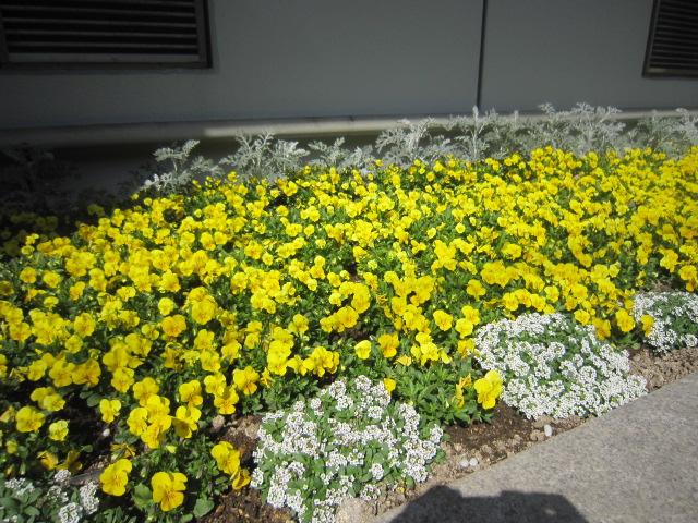 ♪春★楽しい日比谷界隈!_d0004210_15371313.jpg