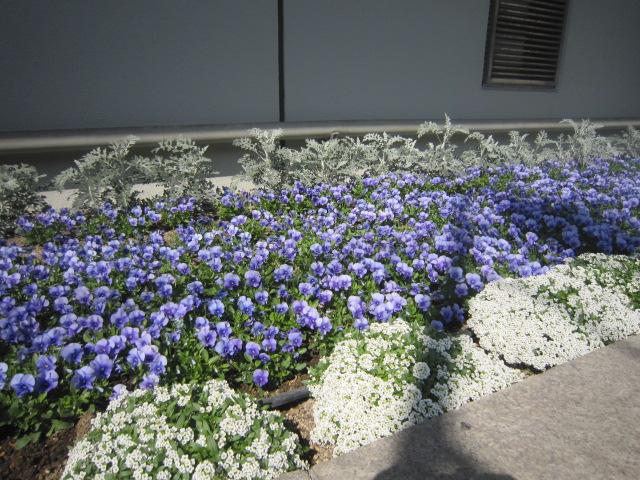 ♪春★楽しい日比谷界隈!_d0004210_15373039.jpg